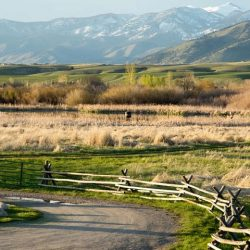 Featured Image Top Rangeland Events This Year 250x250 - Top Rangeland Events This Year